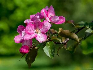 Я хочу подарить вам весну От которой дыханье спирает, От которой вся жизнь в новизну Многоцветием переливает.