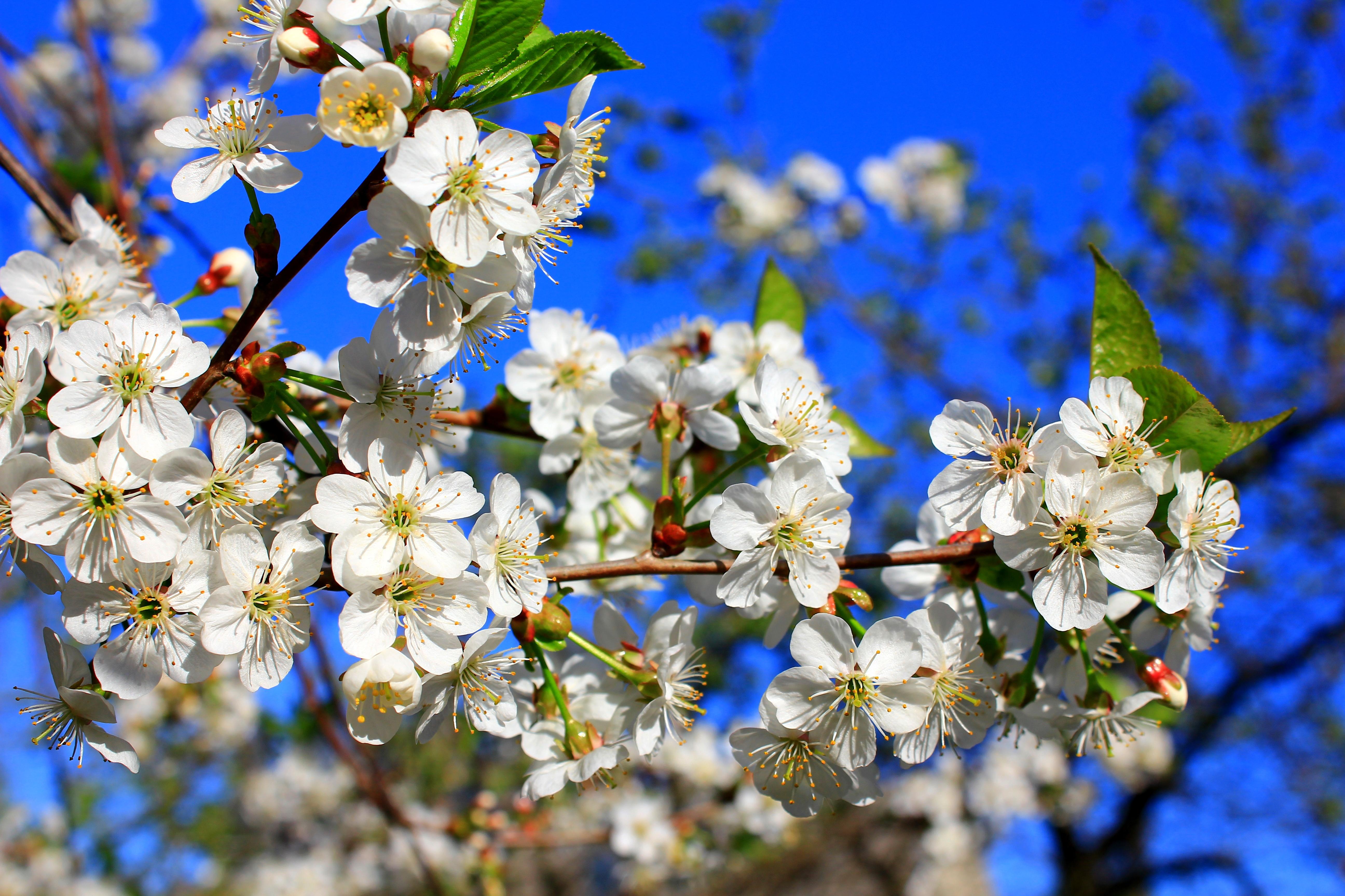 Вспомним о Весне.