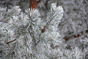 Тоска по снежной зиме....
