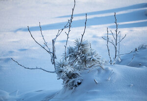 ..Мороз снежком укутывал...