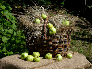 натюрморт с сеном и яблоками